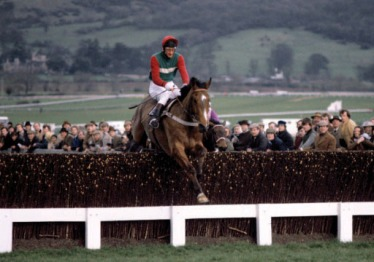 Horse Racing - Cheltenham Gold Cup - Cheltenham - 1981