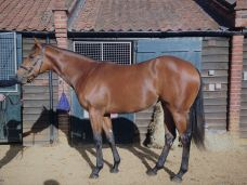 fairyland filly